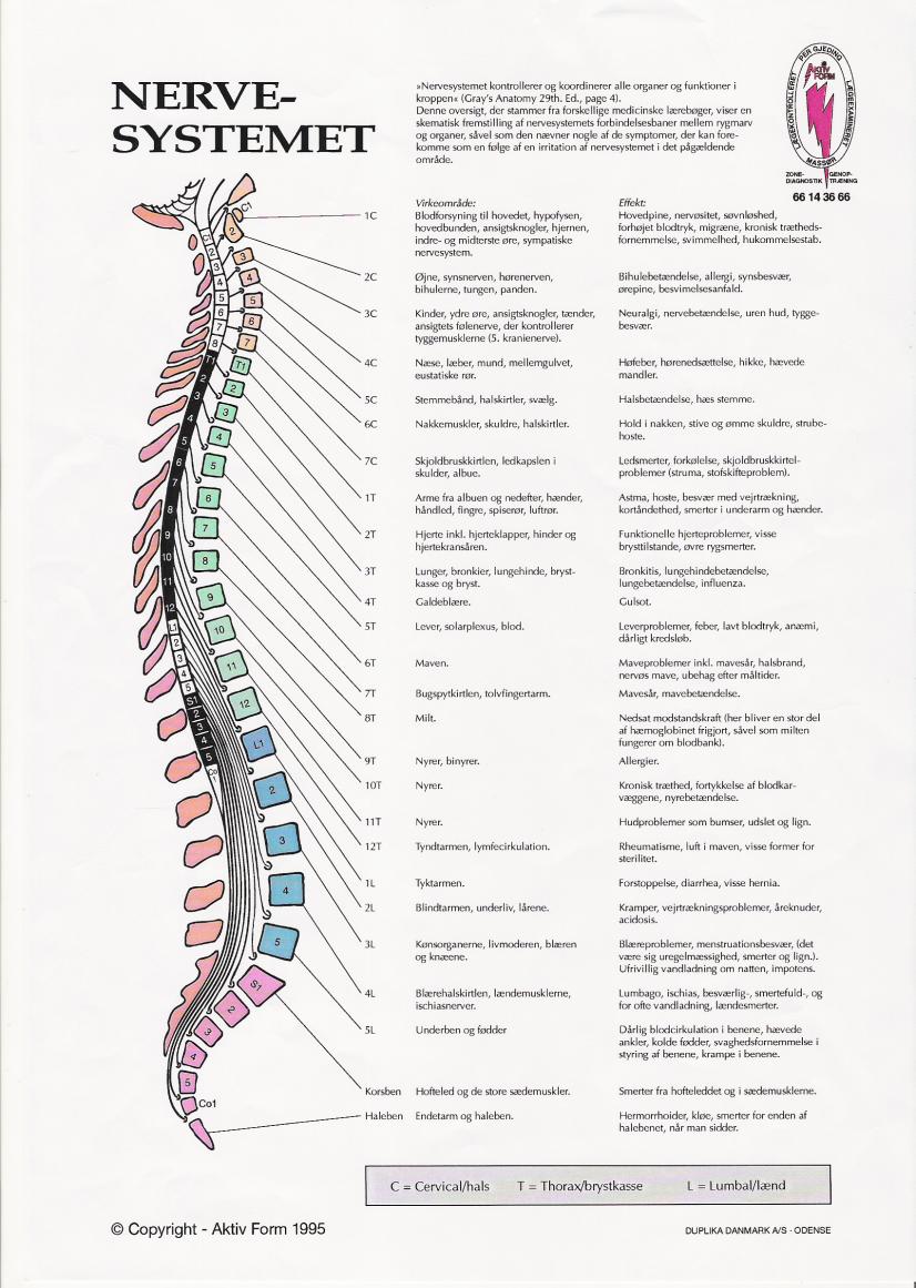 Oversigt kroppens organer Människans anatomi